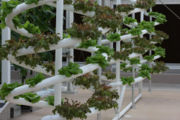Note that several plants can be grown stacked vertically, greatly reducing footprint