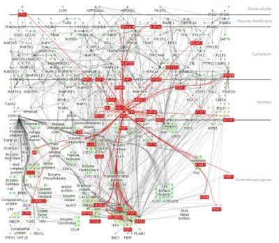 This diagram shows a small fraction of the biochemical interactions in the human brain. A  doctor could not be expected to design a tailor-made intervention to nudge such a complex system into a state of health. However, artificial intelligence makes it possible to do so.